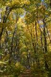 Fall Hiking Stock Image