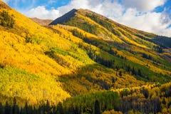 Fall Hills of Colorado. Yellow Aspen Trees Forest near Aspen, Colorado, USA Royalty Free Stock Photos