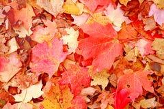 Fall-Hintergrund stockfoto