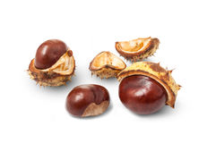 Fall horse chestnuts Royalty Free Stock Photos