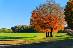 Fall horse farm in Northern Virginia. Morning sun on a horse farm in Northern Virginia, with trees, pasture, grass and fencing Stock Image