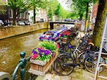 Fall i Amsterdam Arkivfoton