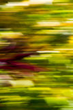 Fall II. A colorful foliage blur seen from a fast-moving car  along a forest road Royalty Free Stock Image