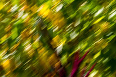 Fall III. A colorful foliage blur seen from a fast-moving car  along a forest road Stock Photos
