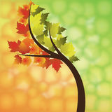 Fall illustration Stock Images