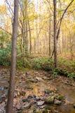 Fall im Wald Stockfotos