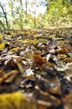 Fall Impression. A footpath in fall, covered with colorful leaves stock image