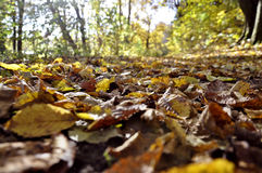 Fall Impression. Autumn is simply the most colorful and beautiful month stock image