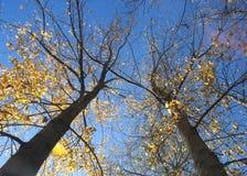 Fall In Kullu, India Royalty Free Stock Photos