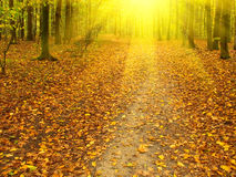 Fall In The Forest. Stock Images