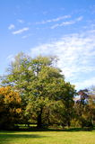 Fall In The Park With Green Trees Under Blue Sky Royalty Free Stock Images