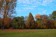 Fall In The Park With Green Trees Under Blue Sky Royalty Free Stock Photo