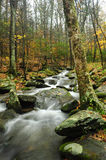 Fall In The Smoky Mountains Royalty Free Stock Photo