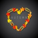 Fall-inliebe Stockbilder