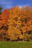 Fall-Jahreszeit-Farben Stockfoto