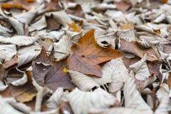 Fall in Kanada Lizenzfreies Stockfoto