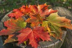 Fall in Kanada Stockfoto