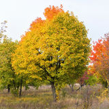 Fall in Kanada Stockfotos