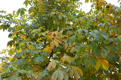 Fall in Kanada Stockbild