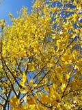 Fall in Kolorado Lizenzfreie Stockfotos