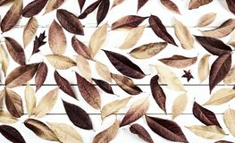 Fall lässt Stillleben-Anzeige mit natürlichen warmen einfarbigen braunen Tönen und umfasst den rustikalen hölzernen Brett-Hinterg stockfoto