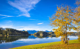 Fall at the lake. Forggensee in Allgaeu in autumn Stock Images
