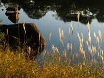 Fall lake landscape. With feather grass reflection in the water Royalty Free Stock Photos