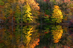 fall lake scene trees Arkivbild