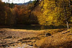 Fall in A Lake At The Yedigoller National Park Stock Photography