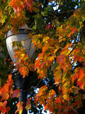 Fall Lamp. A lamp framed by some fall foliage Stock Image