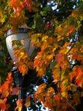 Fall-Lampe Stockbild