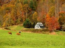 Fall Landscape 2 Stock Image