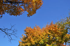 Fall landscape. A Fall landscape Quebec, canada Royalty Free Stock Photos