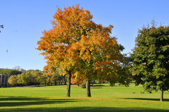 Fall landscape. A Fall landscape Quebec, canada Royalty Free Stock Photo