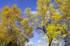 Fall landscape. A Fall landscape Quebec, canada Royalty Free Stock Images