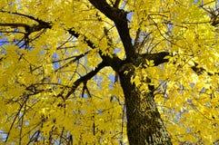 Fall landscape. A Fall landscape Quebec, canada Stock Image