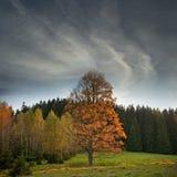 A fall landscape Stock Photos