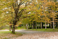 Fall landscape. In the park royalty free stock photos