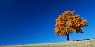 Fall landscape and blue sky Royalty Free Stock Photos