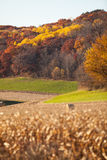 Fall Landscape. With cornfields and colored leaves stock photo