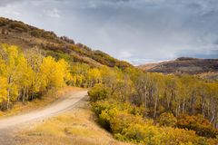 Fall Landscape Country Road. Fall Landscape With Country Road and Aspens Royalty Free Stock Photo