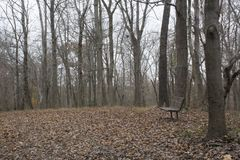 Bench in peaceful fall landscape royalty free stock photos