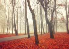 Fall landscape - deserted fall park alley with trees and dry fallen orange fall leaves in foggy weather. Fall November foggy landscape. Deserted fall park alley royalty free stock images