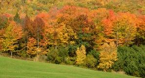 Fall landscape Royalty Free Stock Photos
