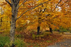 Fall landscape. Quebec province Canada stock images