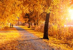 Fall landscape. Fall trees with dry fall leaves in sunny weather. Fall trees along the park alley in sunny weather. Fall landscape royalty free stock photography