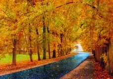 Fall landscape. Fall trees and fall leaves on the wet footpath in fall park alley after rain. Fall landscape. Fall trees with yellow foliage and fall leaves on royalty free stock image