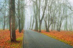Fall landscape. Foggy fall park alley with bare autumn trees and fallen colorful red leaves. Fall landscape. Foggy fall park alley with bare fall trees and dry stock photo