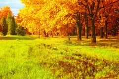 Fall landscape. Golden trees and flooded lawn in the fall forest royalty free stock photos