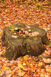 Fall landscape with log Royalty Free Stock Images